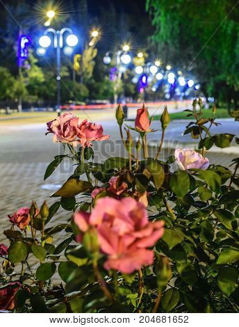 A lightened City street at night. Flower bed with roses. Pokrov town, Ukraine