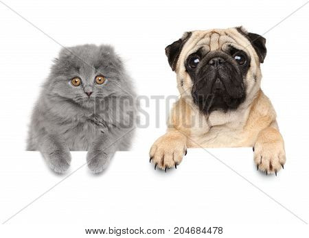 Cat And Dog Above Banner