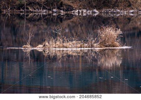 Bushes in the middle of the lake. View of the water with dry vegetation. A pond with calm water