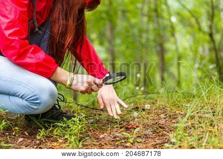Photo of girl with magnifying glass studying plants in summer forest