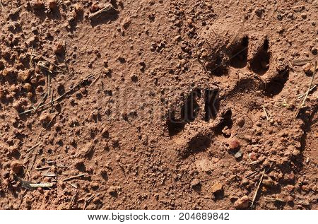 dog foot print on wet soil ground