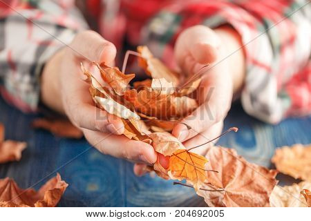 male hands holding heap of yellow maple leaves