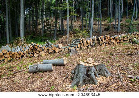 Damage to nature. Deforestation, destruction of deciduous forests. Europe