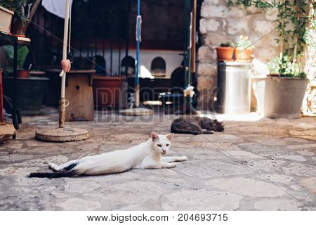 Skinny sad lonely white dirty stray cat lays sprawled on cobbled floor lazy and sleepy in morning sun in old european town