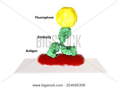 Direct immunofluorescent reaction RIF, 3D illustration. RIF is immunological reaction used in diagnostics of different infectious diseases