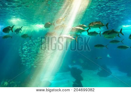 Underwater blue background with sunbeams. Group of various species tropical fishes in large sea water aquarium. Lisbon Oceanarium, Portugal. Tourism, holidays and leisure concept.