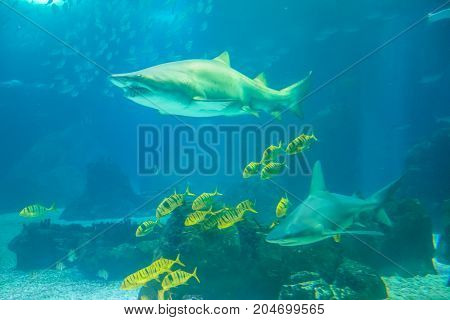 Underwater blue background. Group of various species of tropical fishes and big sharks in large sea water aquarium. Lisbon Oceanarium, Portugal. Tourism, holidays and leisure concept.