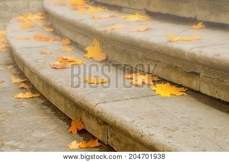 Autumn leaves. Fallen dry orange maple autumn leaves on the stone staircase. Autumn background with autumn leaves at the stairs. Dry autumn leaves, closeup. Autumn leaves background in foggy weather