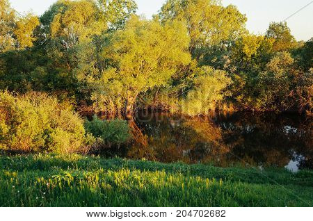 Fall trees in the fall forest near the river at the sunset. Fall   landscape forest scene. Forest sunset fall view of yellowed fall  trees in the forest. Forest fall landscape background