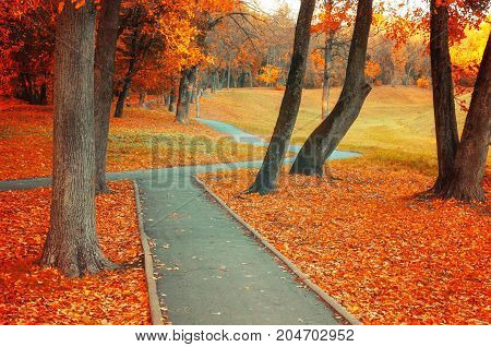 Fall landscape. Fall deserted park alley with bare fall trees and dry orange fallen fall leaves -cloudy fall landscape. Colorful fall  park. Fall landscape park scene