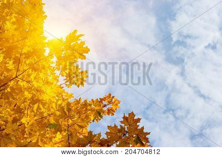 Colorful maple leaves close up on a beautiful sunny autumn day. Autumn landscape.Abstract fall background