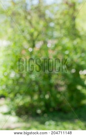 Abstract nature background. Blurred green bush with lush green foliage. Vertical photo