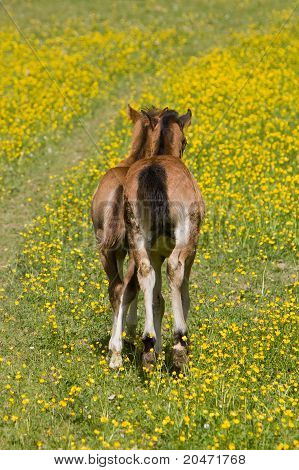 Two baby ponies on yellow field