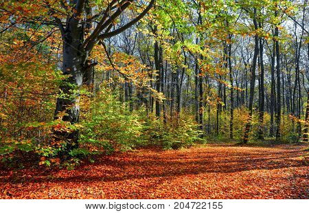 The wide trail covered with fallen leaves on the sides of which grow trees with still green and already yellow leaves that brightens autumn sun.