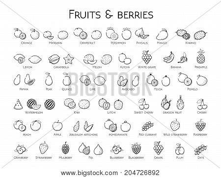 Outline black linear web icon set - Fruit & berries Thin bold Line food Icons For logo label Orange banana melon apple blueberry pineapple pomelo kiwi peach fig kiwi tropical collection on white