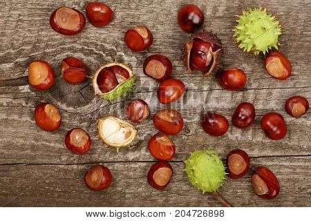 chestnut isolated on old wooden background. Top view.
