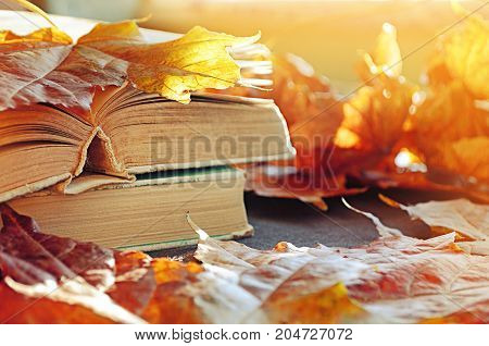 Autumn background. Old books on the table among maple autumn leaves.Focus at the book's spine. Autumn still life with books and autumn leaves. Sunny autumn background. Autumn concept. Autumn still life
