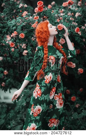 Red-haired young girl with long braids in a floral dress against the background of a large bush of roses. Young woman posing in the garden. Young model. Young girl in floral dress. On a summer day a young woman in the garden