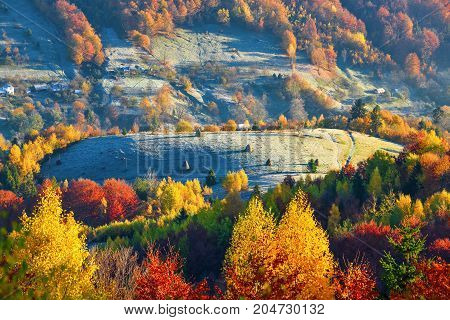 Mountain hills covered with trees with leaves of orange yellow and scarlet colors and evergreen fir trees behind which are hiding huts.