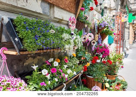 Flower shop outdoor stand with colorful flower pots.