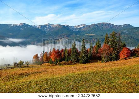 Thick fog like milk covered the valley behind which rise mountain hills the tops of which are powdered with snow on which fall warm rays of the sun.
