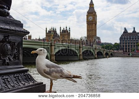 Landscape of a seagull sitting on a lamppost with a view Westminster Bridge, the Thames River, Big Ben and the Houses of Parliament.