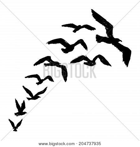 Seagulls -  Grunge Silhouette of Flying Birds
