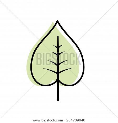 natural and tropical leaf vector illustration design