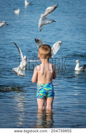 Little caucasian boy standing in the sea and throwing pieces of bread to white seagulls