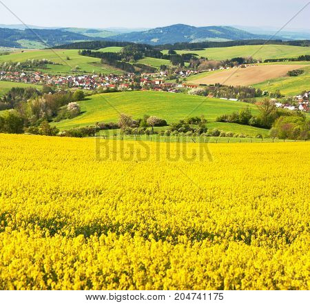 Field of rapeseed canola or colza in Latin Brassica napus with beautiful cloud rape seed is plant for green energy and green industry springtime golden flowering field