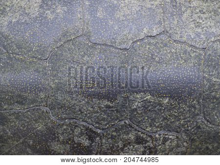 Background Texture Of Tortoise Shell. Turtle Shell.