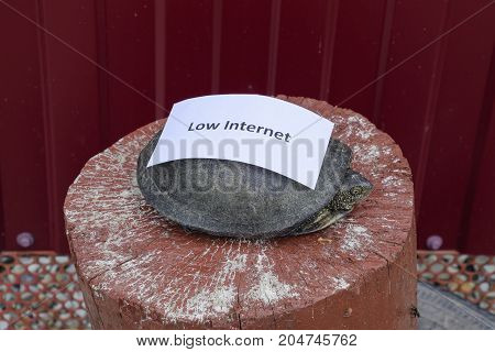 Low Internet. A Bad Internet Symbol. Low Download Speed. Slow Internet. Ordinary River Tortoise Of T