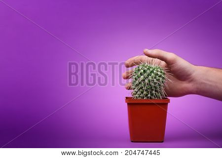A small sharp cactus in a red pot. Cactus decor, flower, landscape. Cactus garden, on a bright pink background.