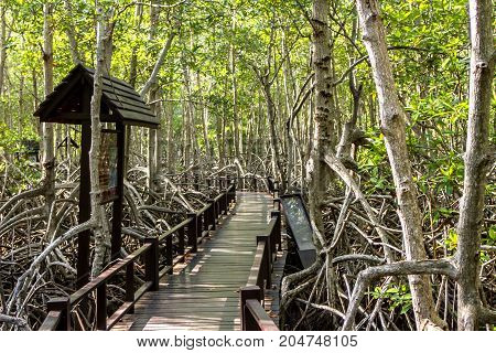 Mangrove nature trail with bridge wooden background