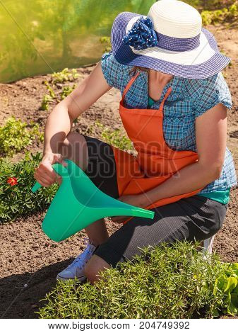 Gardening. Mature woman in orange apron big hat working in garden watering plants flowersbeds outdoor