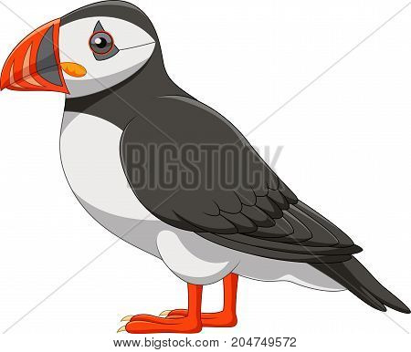 Vector illustration of Cartoon puffin isolated on white background