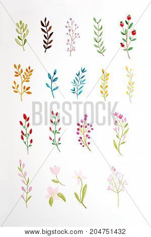 Hand drawing flowers and leaves in watercolor style on white paper background