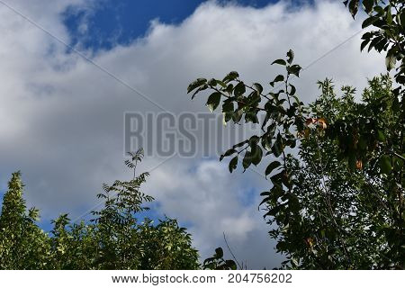 beautiful cloudy sky with the presence of green beautiful trees