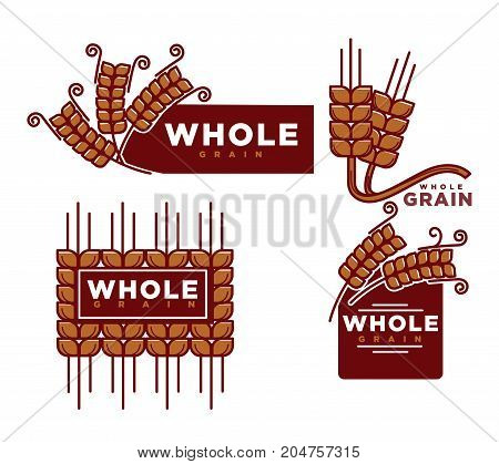 Whole grain cereal product logo templates. Vector set of wheat, rye ears or buckwheat and oat or barley for bakery shop or baking products muesli or organic porridge and flour package label design