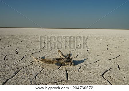 old snag on the cracked salt lake