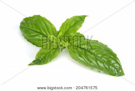 Basil Leaf Isolated On A White Background