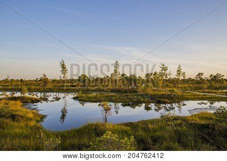 nature, landscape, summer, sunset, swamp, water, evening