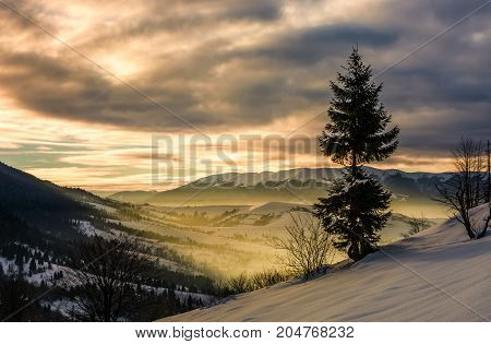 Lonely Spruce Tree On Hillside At Sunrise