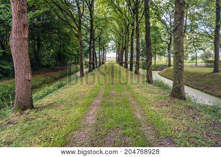 Picturesque grassy path between tall trees in a Dutch park on a sunny day in the late summer season.