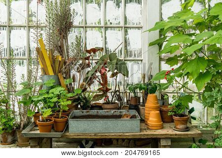 romantic idyllic plant table in the green house with old retro flower pot pots garden tools and plants