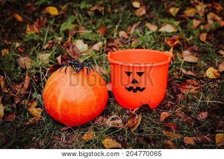 Halloween pumpkin toys in autumn fall nature