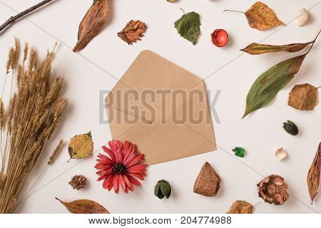 Autumn Background With Open Envelope