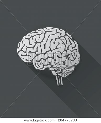Vector of human brain on white background