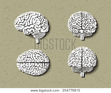set of human brain.vector style paper cut.