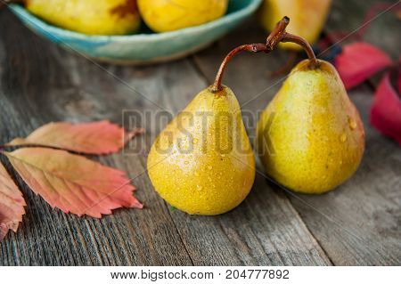 Autumn Harvest Concept - Fresh Ripe Organic Yellow Pears With Water Drops On Rustic Wooden Table, Da